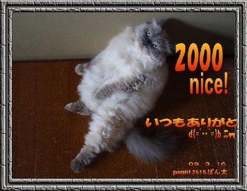 2000nice-ponta1351san.jpg