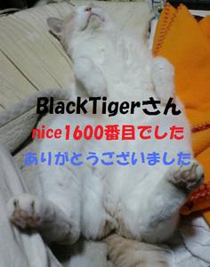 m_1600ThankYou.jpg